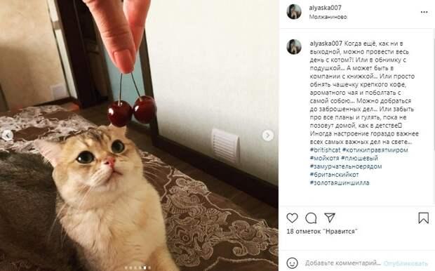 Фото дня: кот из Молжаниновского дегустирует черешню