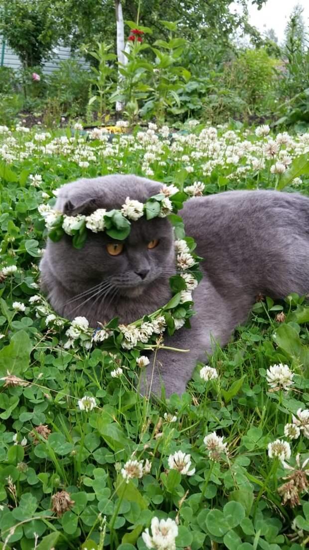 Люди!!! Нужна срочная, немедленная помощь!!! Хозяйка сделала ремонт и решила, что кот будет портить такую красоту, и потому его надо усыпить.