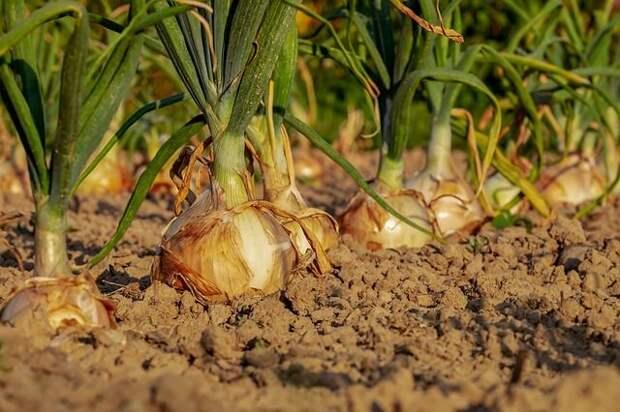 5 секретов образцового лука