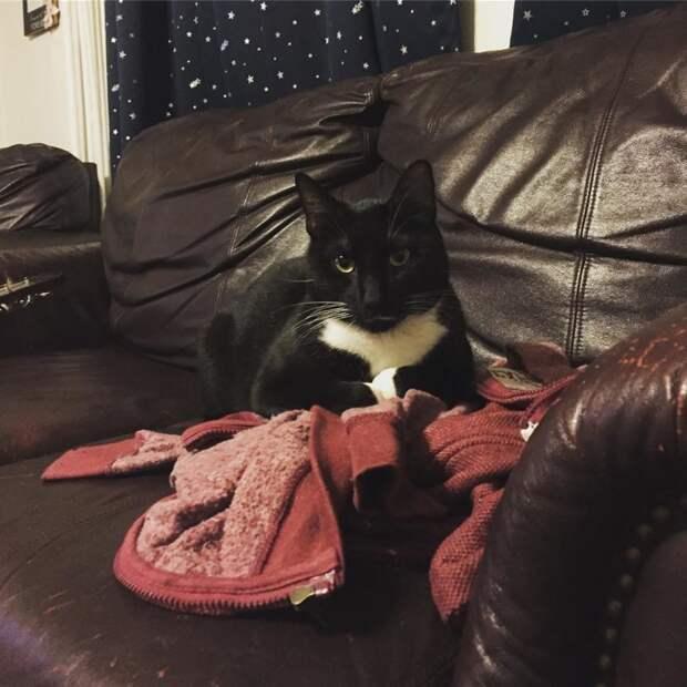 Коты в авторитете предпочитают лежать на кожаных диванах кот, коты, опасный кот, прикол, суровый