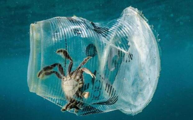 Кто может очистить моря и океаны от пластикового мусора?