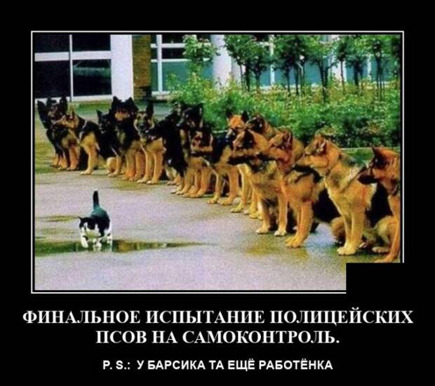 Демотиватор про служебных собак