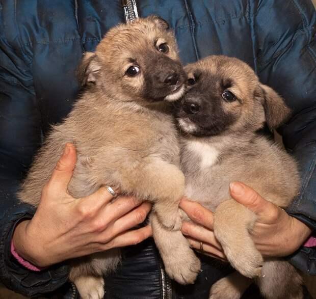 Семерых щенков закрыли в сарае без еды и воды приют, собака, щенки, щенок