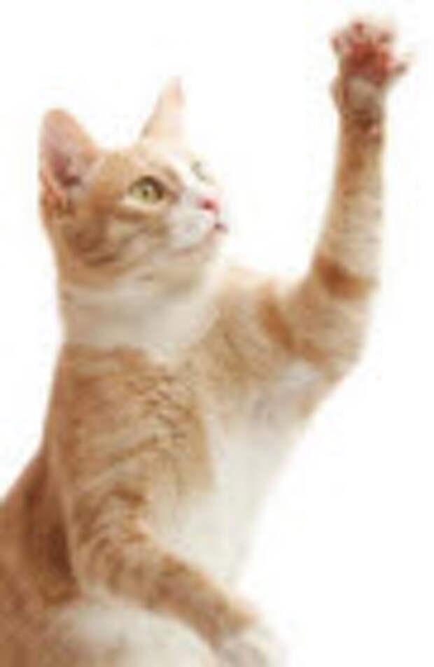 кошка и ее лапа