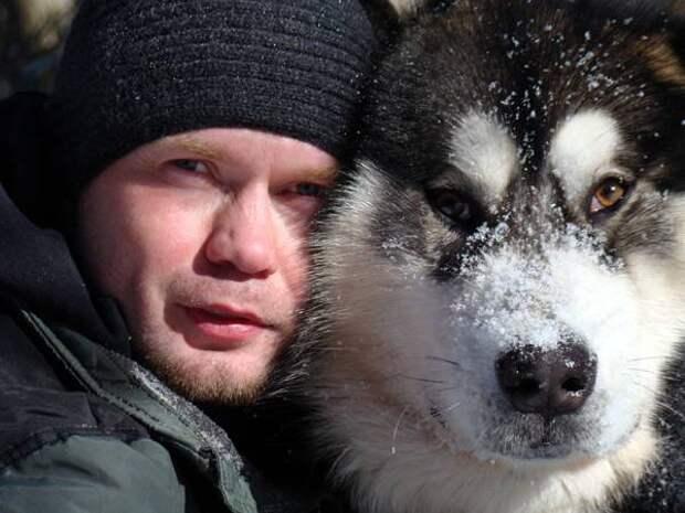 Аляскинский маламут, фото выбор породы собаки фотография