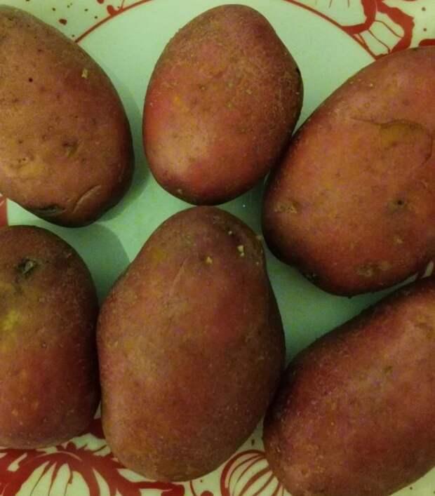 Знакомый повар сказал, что я всегда варила картошку неправильно. Расскажу, какие 5 важных советов он дал