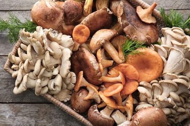 Грибные фермы. Можно ли посеять грибницу дома?