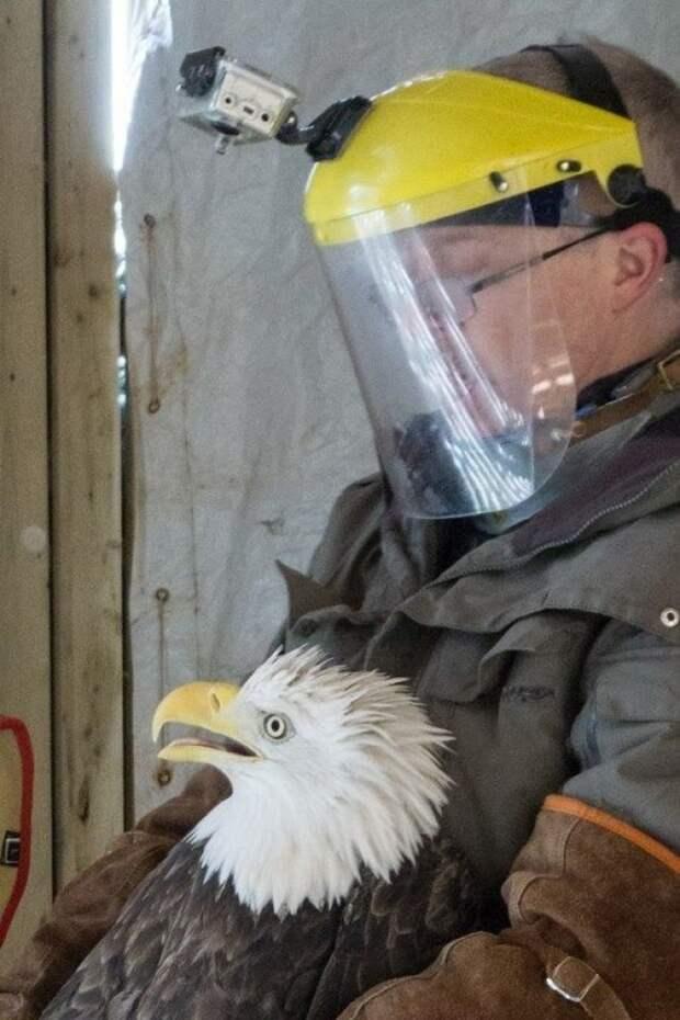 eagleslove02