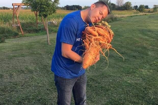 Чтобы вырастить огромный овощ Крису понадобилось 9 месяцев в мире, морковь, овощи, огород, урожай