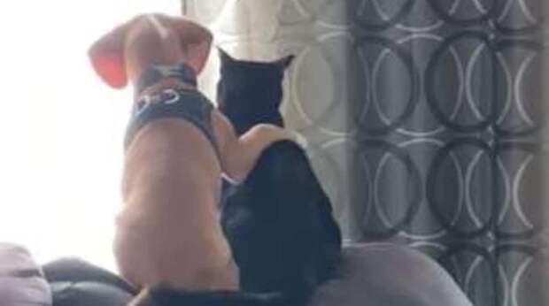 Девушка увидела, как пёсик запрыгнул на диван к коту и резко обнял его