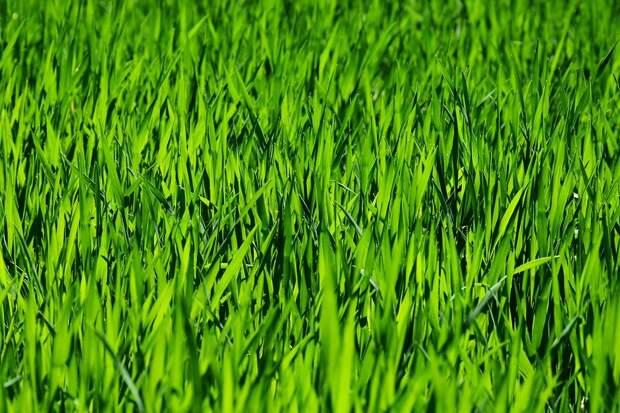 Трава, Поле, Луг, Раш, Рост, Завод, Природы, Зеленый