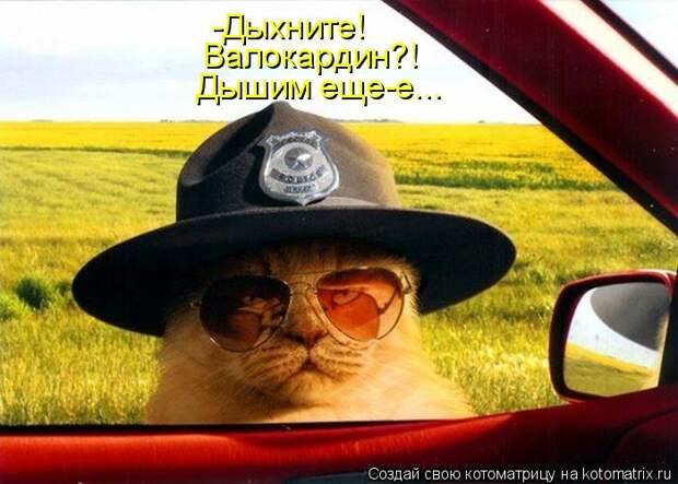 http://kotomatrix.ru/images/lolz/2012/02/05/1102786.jpg