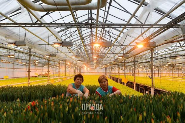 Быстрее, вкуснее, проще: 136 предприятий Нижегородской области перешли на бережливые технологии