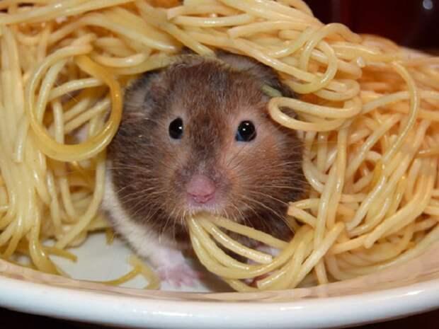 Крыса в макароне