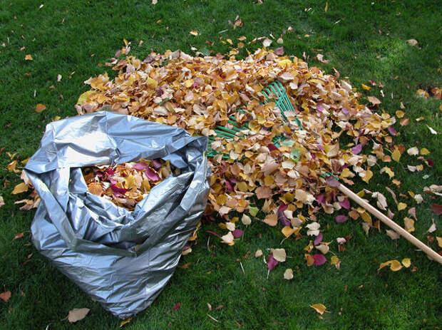 Из опавшей листвы можно приготовить прекрасный компост