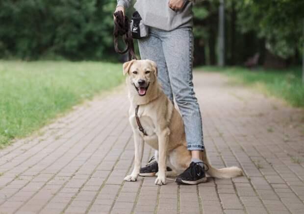 Собаки икошки впоисках дома