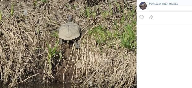Фото дня: в Леоновском пруду проснулись черепахи