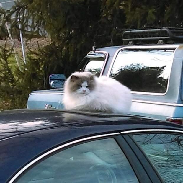 Пушистого котика бросили при переезде, но он все равно получил помощь