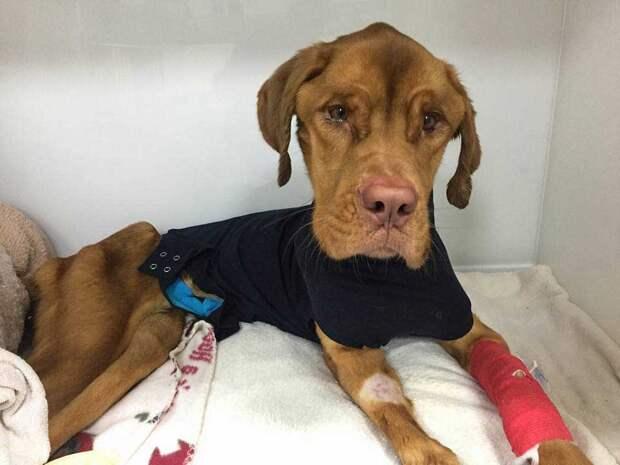Собака Эльза не могла встать на ноги, потому что у нее полностью отсутствовали мышцы… Только чудо может помочь этой крохе!