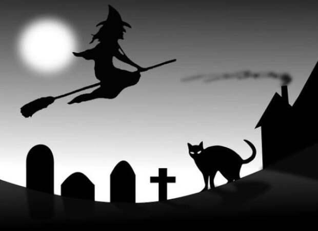 Любимая кошка дьявола животные, коты, факты