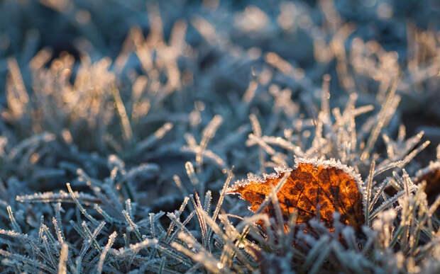 В Подмосковье из-за заморозков ввели «оранжевый» уровень опасности