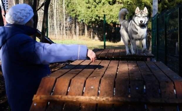Опыт показал: площадки для выгула собак в Ижевске будут больше
