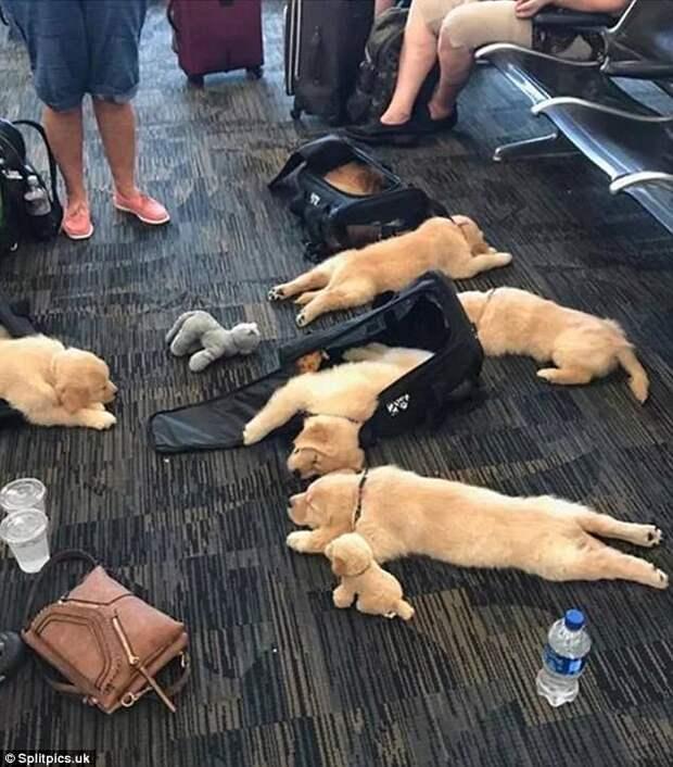 Где устали, там и заснули: милота щенячья!