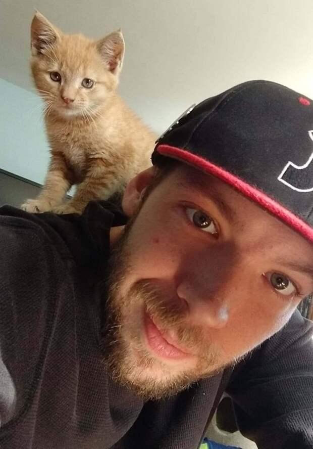 Котенок и мужчина