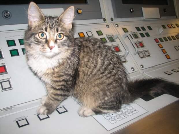 На кораблях и субмаринах заводят котов. /Фото: forums.airbase.ru.