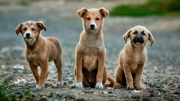 Активисты спасли 68 собак от съедения на фестивале в Китае
