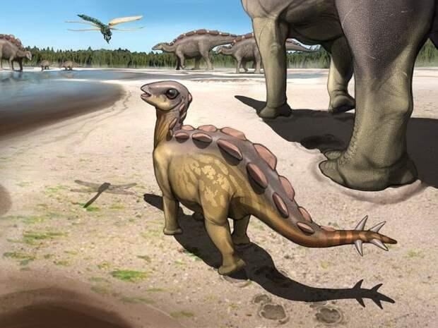 Маленькие стегозаврята были пальцеходящими