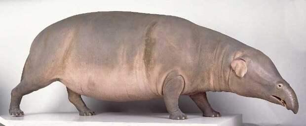 Меритерий: Тот странный свин с хоботом из Ледникового Периода. Нелепый предок слонов и ламантинов