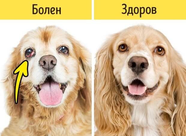 12сигналов ктому, что питомца надо срочно показать ветеринару