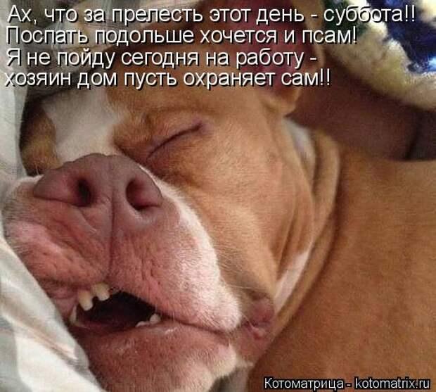 Котоматрица: Ах, что за прелесть этот день - суббота!! Поспать подольше хочется и псам! Я не пойду сегодня на работу - хозяин дом пусть охраняет сам!!