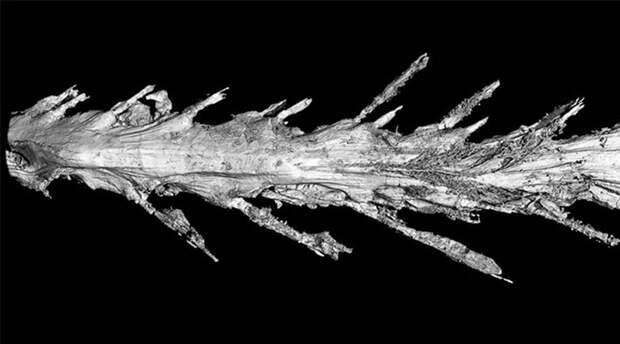 Cтранный динозавр поставил ученых в тупик