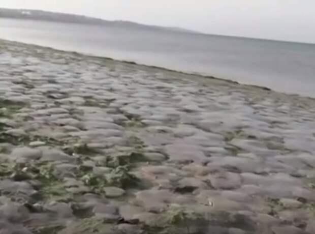 Берега Крыма завалило медузами