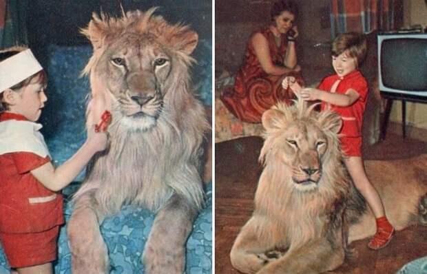 Львы-кинозвёзды, выросшие в городской квартире, или Печальная история советской семьи Берберовых