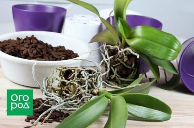Нестандартные способы выращивания эпифитных орхидей