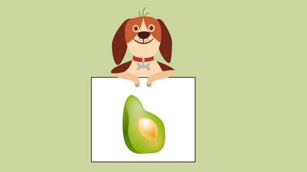 Модно, но под запретом: почему собакам категорически нельзя авокадо и виноград