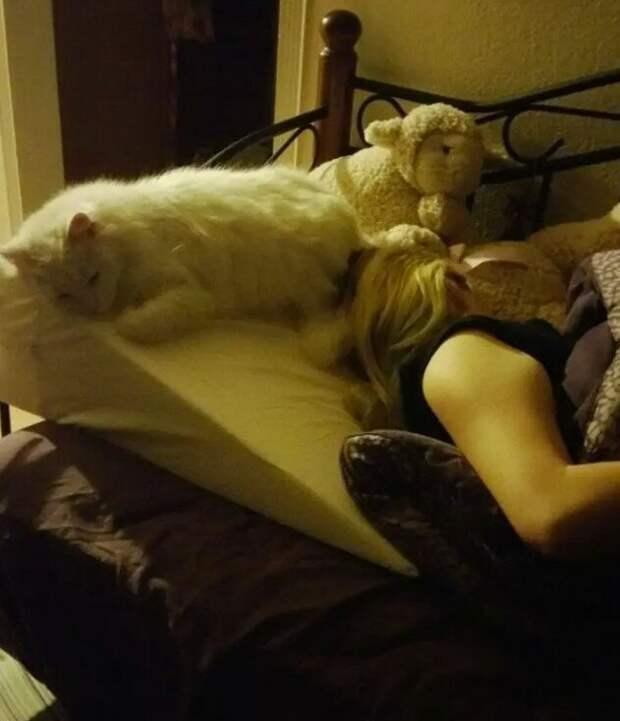 7 фото, доказывающих, что кошки могут быть верными