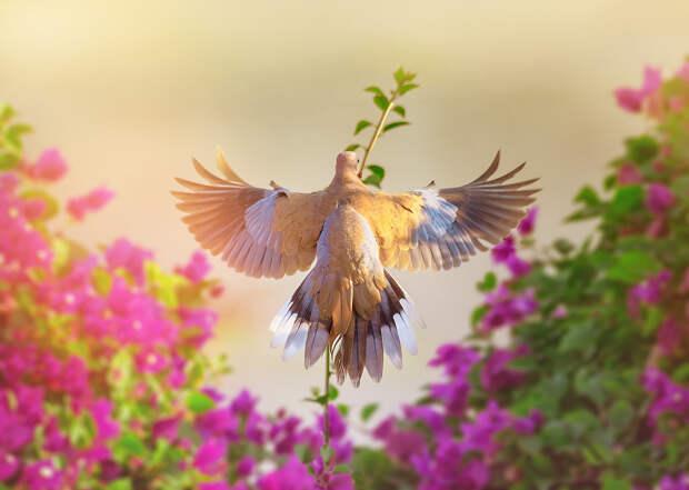 Фотограф живой природы Вишну Гопала