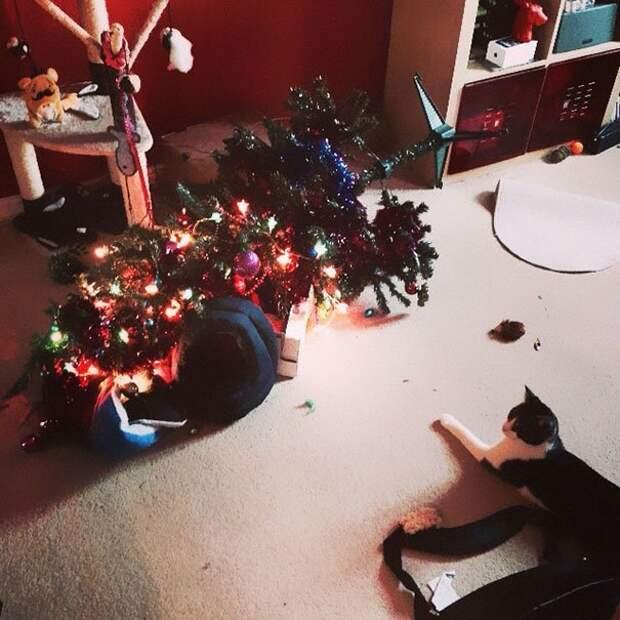 15. Один кот = ноль елок животные, новый год, праздник к нам приходит, разрушительная сила, рождество, собаки и кошки, юмор