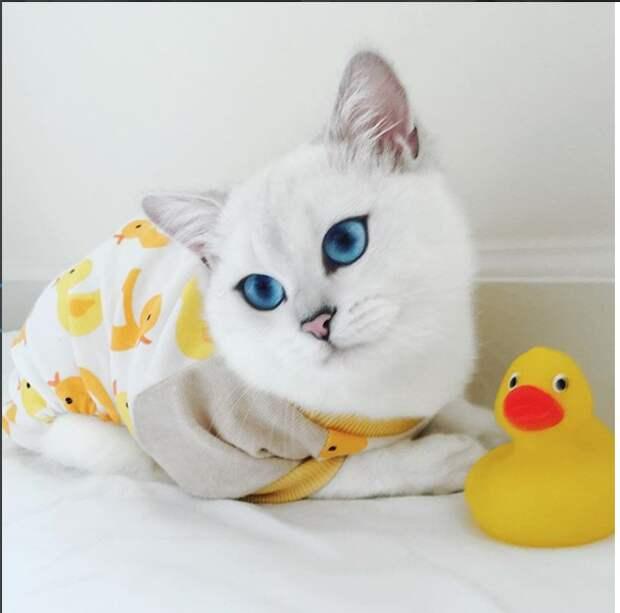 Этому коту приходится доказывать, что его глаза — не фотошоп