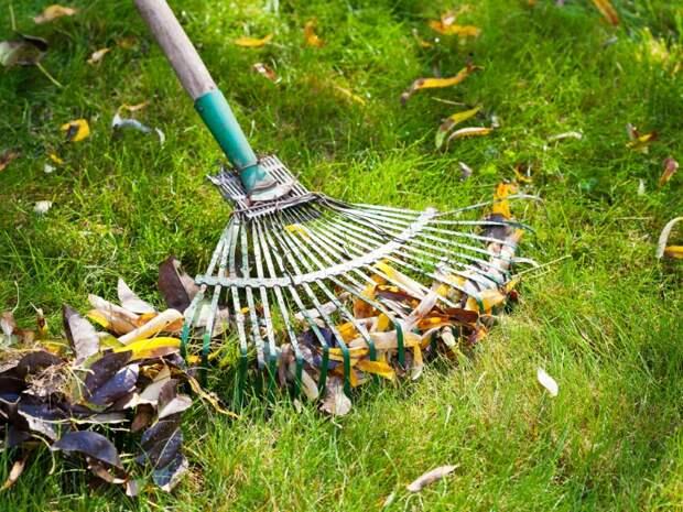 уборка опавших листьев