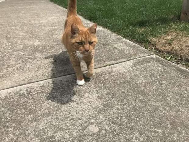 Дружелюбный кот каждый день подходит к своему соседу поласкаться и поздороваться