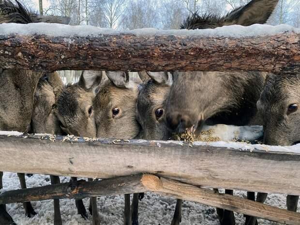 Отпуск на ферме: в России зарождается агротуризм