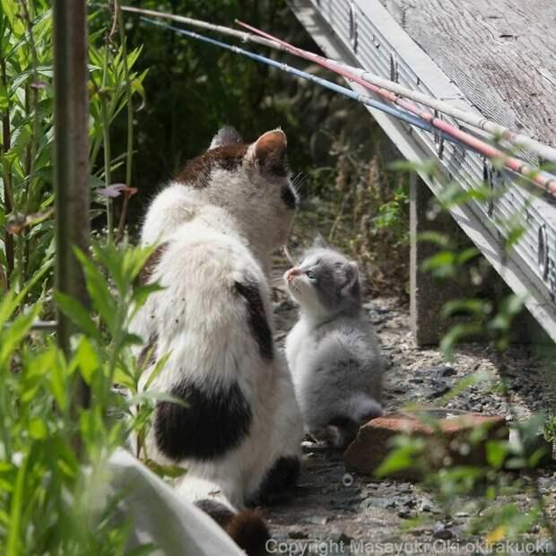 Нескучные будни уличных котиков Токио в объективе Масаюки Оки