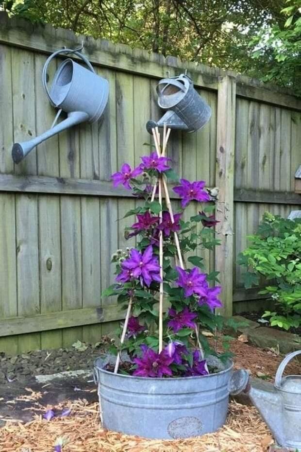 Замечательные идеи использования жестяных ведер для создания красивого украшения сада