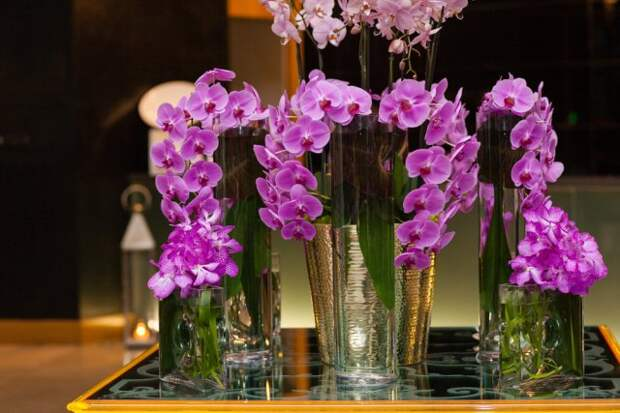 Как вырастить орхидею в воде