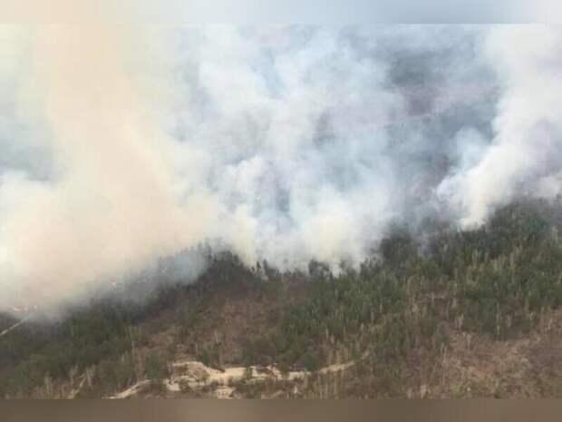 В России сгорела рекордная площадь лесных угодий